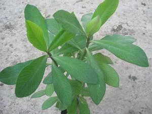 planta-de-la-vida