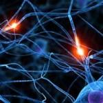 Neuronas del Corazón